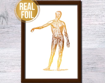 Human body foil poster Scientific print Human body gold foil illustration Medical wall decor Doctor gift Anatomy poster Real gold foil G269