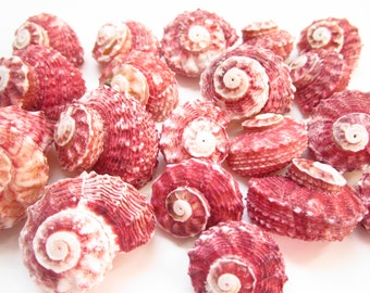 Red Delphinula Shells-Set Of 5-Sea Shells For Crafting-Beach Wedding Decor-Red Shells-Crafting Shells-Shells Supplies-Sea Shells Bulk-Shells