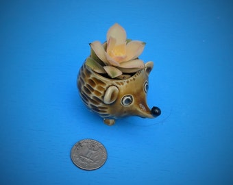 Mini Hedgehog Planter, Succulents, Air Plants, Free Shipping, Whimsical Gift