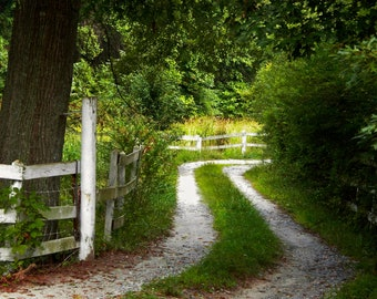 Nature Photography- Green Rural Pathway in Georgia- Travel, Landscape, Southern, Fine Art Photography - 8x10 Etsy Wall Art