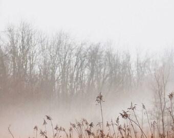 Foggy Mornings Print