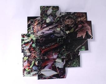 Spores (Leocarpus fragilis)