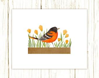 Baltimore Oriole Print -- bird art -- bird art 52 birds stephanie fizer coleman illustration orange bird