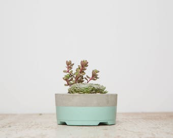 Mother's Day Gift for Her, Small Concrete Planter, Mint