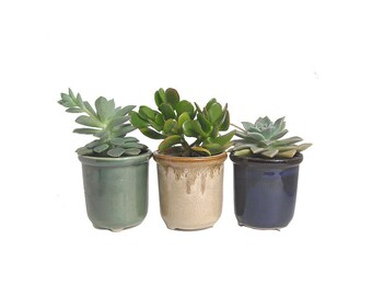 3 Potted Succulents In Round Ceramic Pot Planters Wedding Hostess Party Favor Gift