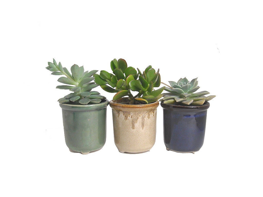 3 Potted Succulents In Round Ceramic Pot Planters Wedding