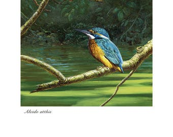 Martín Pescador common Kingfisher blade print bird birds Wildlife illustration Lucía Gómez Serra AlaDeArce