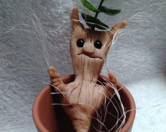 Mandrake, root