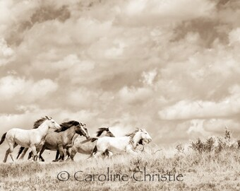 """Horse print,Wild Horse Photo , Horse Photography. Title: """" Chasing the Wind  """""""