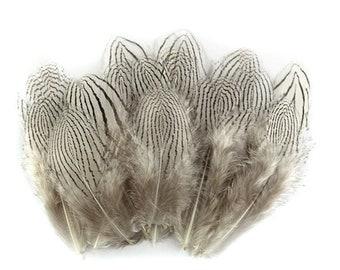 Silver Pheasant Bodyfeathers 12204