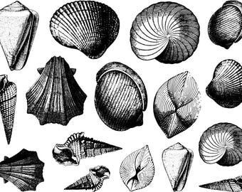 Seashell Ceramic Decals, Glass Decals or Enamel Decals