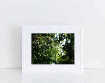 "Wall Art Home Decor Floral Print: Summer Forest (10"" x 12"")"