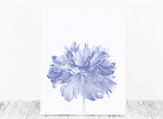 Blue Wall Decor based on A Peony Photograph