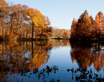 Pond, Reflection, Fine Art Photography, Water, Outdoor, Nature, Trees, Autumn