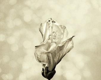 Minimalist Black and White Sepia Hibiscus Flower II - Fine Art Photograph Print Picture