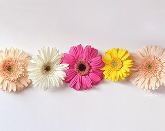 Gerbera Daisy Photograph- Gerber Daisies, Flower Photography, Colorful Flower Photo, Floral Still Life, Home Decor, Girls Room, Daisy Print