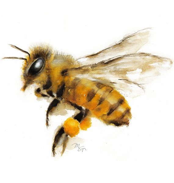 Honey Bee Watercolor Painting Art Print. Nature
