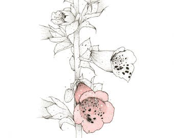 FOXGLOVES screenprint with hand watercolour and drawing by Kerry Lemon