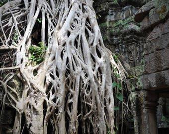 Nature Vs. Structure