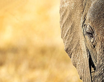 Elephant Face, Photography, Wildlife Photography, Africa Photography, Wall Art, Wall Decor, Decor