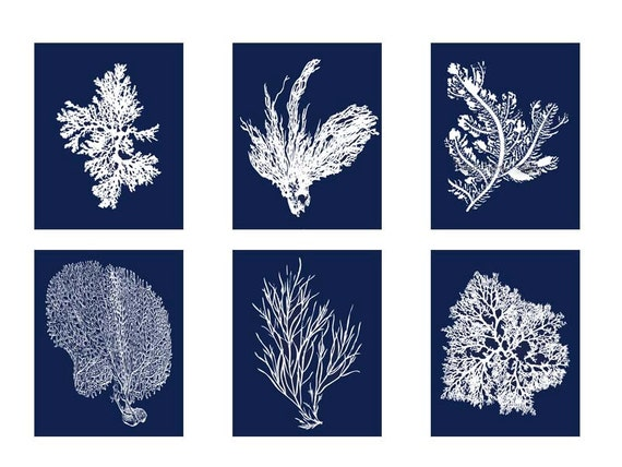 Blue coral navy blue white coral print set of six prints blue coral art coral wall art six coral prints sealife print blue white art