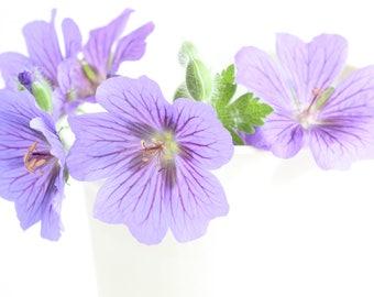 Geranium Picture, Flower Photography, Flower Photo, Fine Art Print, Floral Photography, Purple Flower