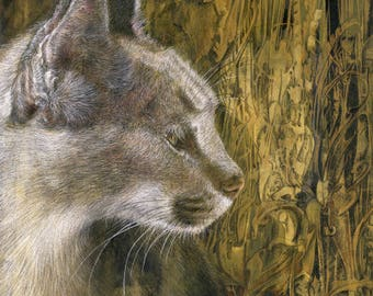 Caramel Caracal print - from an original colour pencil drawing by D Y Hide, signed by the artist, also available as a greetings card