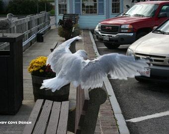 5 x 7 Greeting Card with Envelope - Belfast Landing, Seagull, Maine, Wildlife, Birds