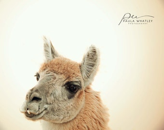 camel photo, nursery art, sepia print, childs room decor, nursery decor, sepia art, nature photo, cream art, cream photo, baby animal art