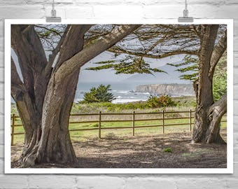 Big Sur Picture, California Coast Art, Fine Art Photography, Big Sur Gift, Monterey Cypress Tree Art, Big Sur Art, Pacific Coast Highway 1