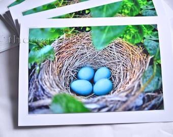 Bird Nest - 5x7 Blank Greeting Card - Robin Eggs