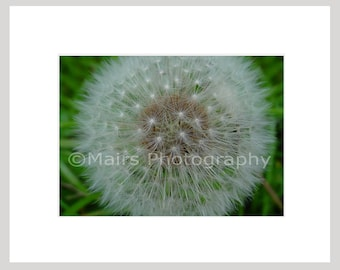 Gift for Mom, Flower Nature Seed Garden Dandelion Weed Macro, Cottage Decor, Fine Art Photography signed matted 5x7 Original Photograph