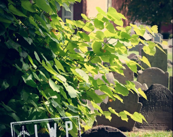 IN STOCK Church Yard, Boston, Afternoon Light, at the Cemetery with Tombstones 12x12 Travel Urban Nature Photograph