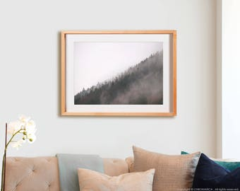 Pyrenees Pines.  Artíes, photography, lines, decor, wall art, artwork, large format photo.