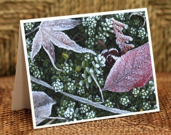 Frosted Plants Blank Greeting Cards (set of 4)