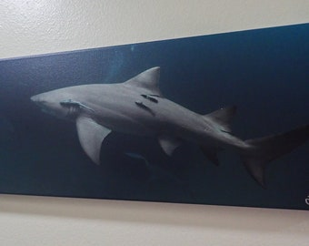 Shark Underwater photo on Canvas