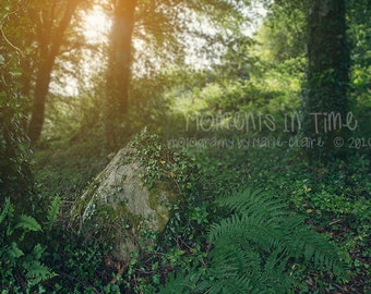 Moments In Time Ivy Rock Irish Forest Digital Background