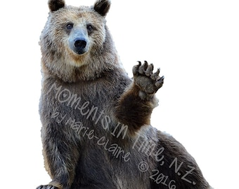 Moments In Time Friendly Bear Animal Overlay