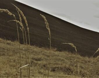 Winter Wheat in the Rain