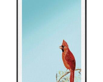 Cardinal- Gallery print