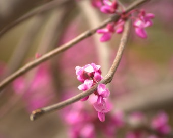 Matted Photograph, Floral Photography, Purple Flowers on Branches, Fine Art Photography, Nature Photography, Formal Living Room, Minimalist