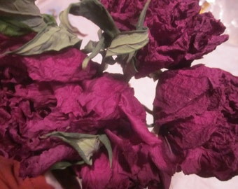 Dry Whole Purple Tree Peony Flowers with Stems, Organically Grown, Naturally Dried