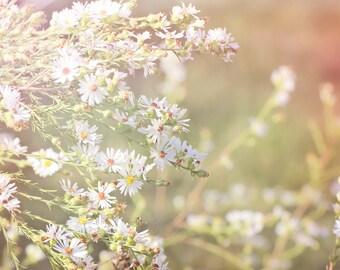 White Wildflowers Color Photo Print { sunshine, sunlight, flower, bud, green, yellow, pink, wall art, macro, nature & fine art photography }
