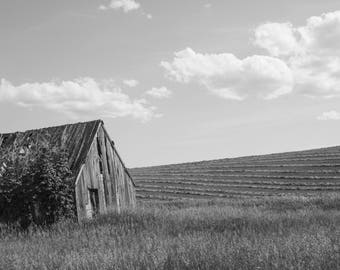 Swan Valley Barn-- black and white