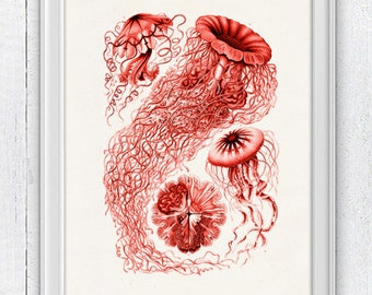 Jelly fish Discomedusae in red - sea life print- Haeckel sea life illustration A4 print SAS112