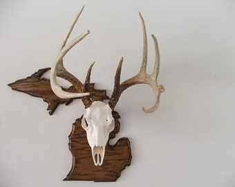 State of Michigan - European Deer Mount Display Plaque - Provincial Oak