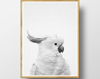 Australian Animal Print, Australian Cockatoo, Cockatoo Print,  Australian Bird Print, Australian Bird Wall Art, Nursery Animals, Cockatoo