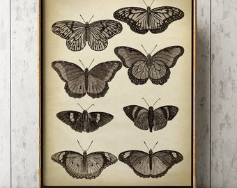 Butterfly print, Butterfly poster, butterflies wall decor, scientific butterflies chart, vintage butterfly, black and white aged insect