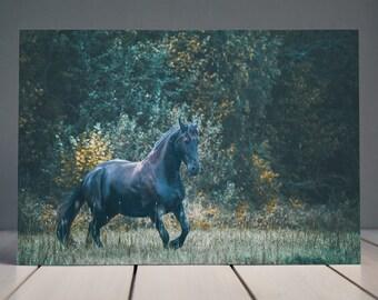 Black Friesian Horse Print | Horse Photography | Equine Fine Art Horse Print | Horse Wall Art | Horse Home Decor
