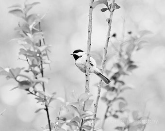 black and white bird photography, chickadee photography, nature wall art, bird art, bird prints, black and white art no 1